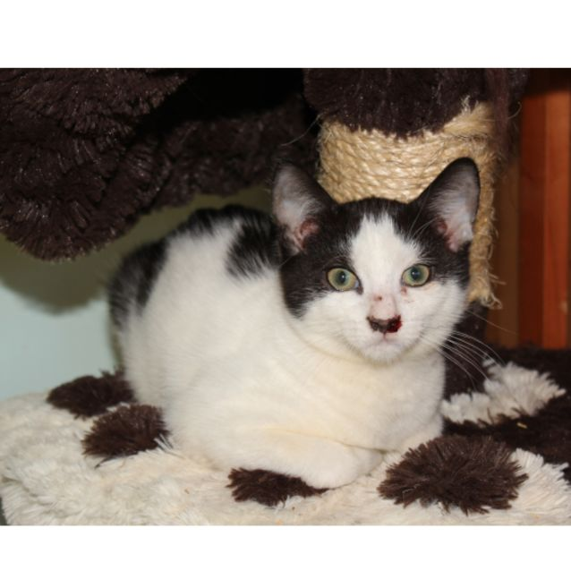 Photo of Ralph **2nd Chance Cat Rescue**