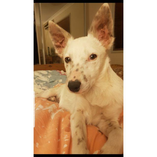 Photo of Alba