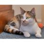 Photo of Ysanne **2nd Chance Cat Rescue**
