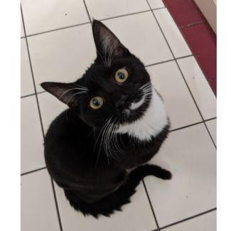 Mr Migs ^^Dandy Cat Rescue^^
