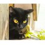 Photo of Jackie Collins ** 2nd Chance Cat Rescue**