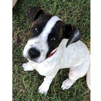 Bo Peep ~ April Adoption Special $350 ~