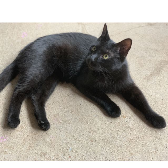 Photo of Mr. Black Would Love A Foster Or Forever Home!