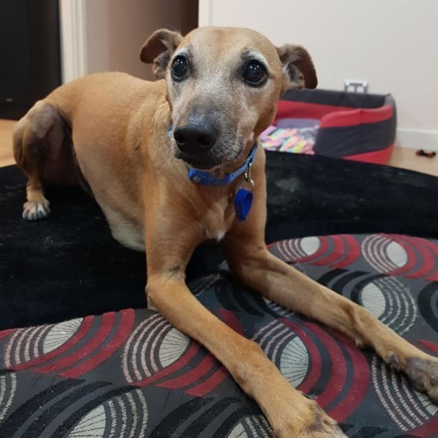 Photo of Mitty D1044 Adopted 23/9/18