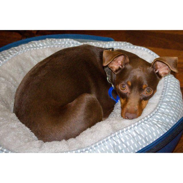 Photo of Winnie D1030 On Trial 3/11/18