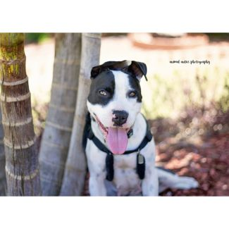 Becca - Adopt or foster me!
