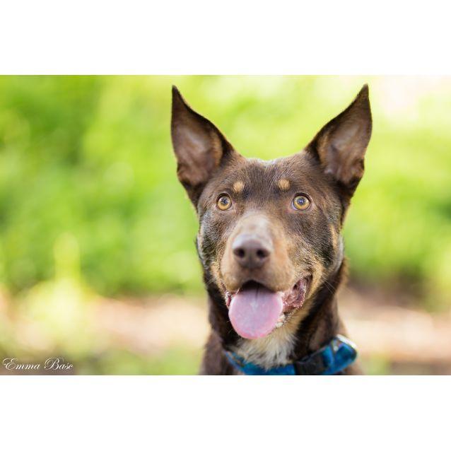 Dfl Dog Rescue