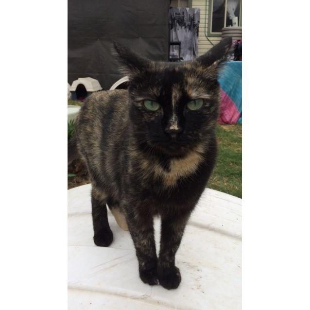 Photo of Sybil
