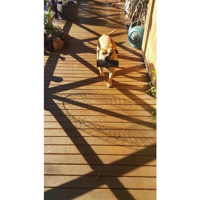 Photo of Seth (Wombat)