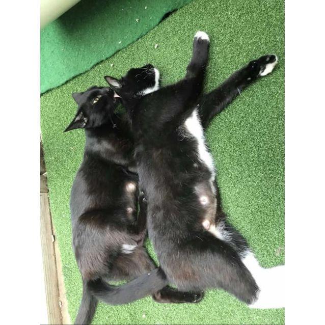 Photo of Molly & Polly