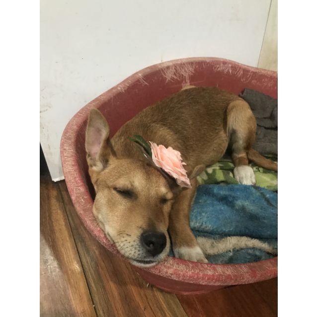 Photo of Tasha (On Adoption Trial)