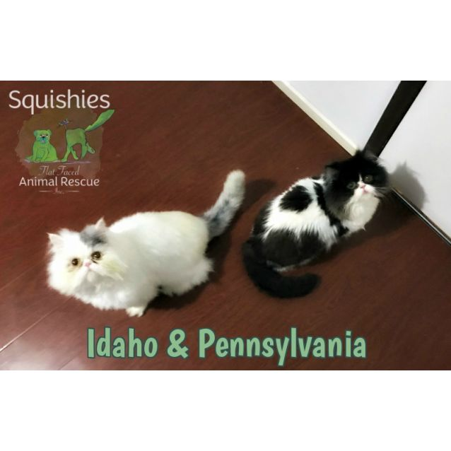 Photo of Idaho & Pennsylvania