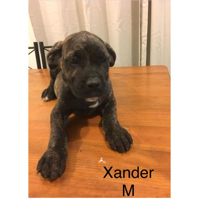 Photo of Xander