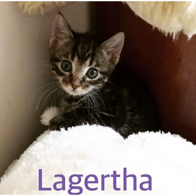 Photo of Lagertha