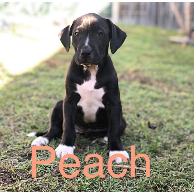 Photo of Peach