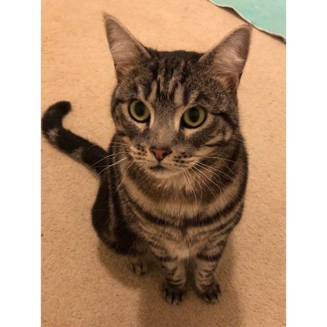 Photo of Meisha