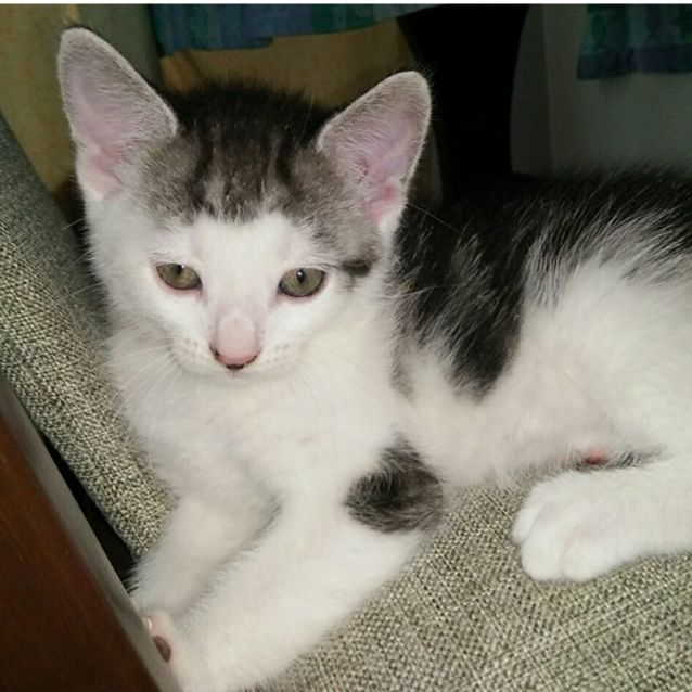 Photo of Aria ~ $95 Adoption Fee ~
