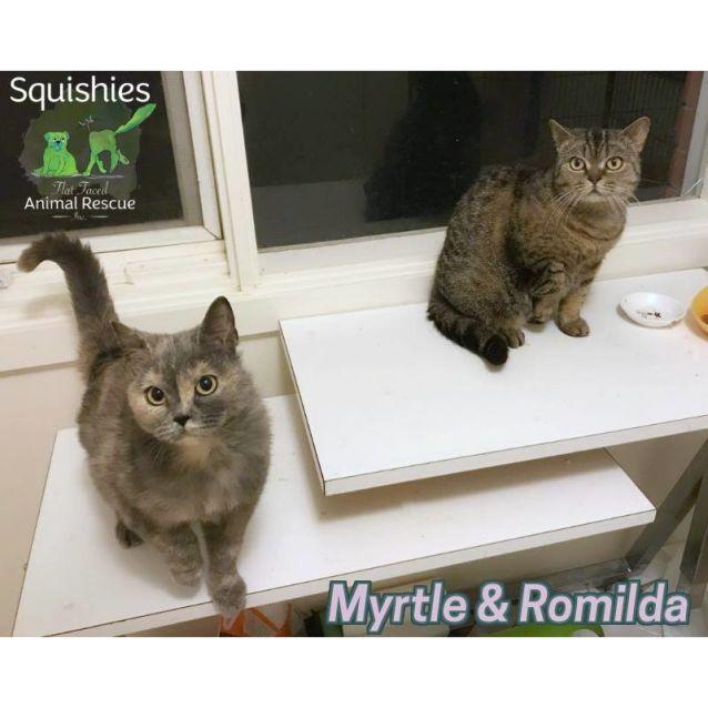 Photo of Myrtle & Romilda