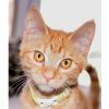 Photo of Masey ** 2nd Chance Cat Rescue **