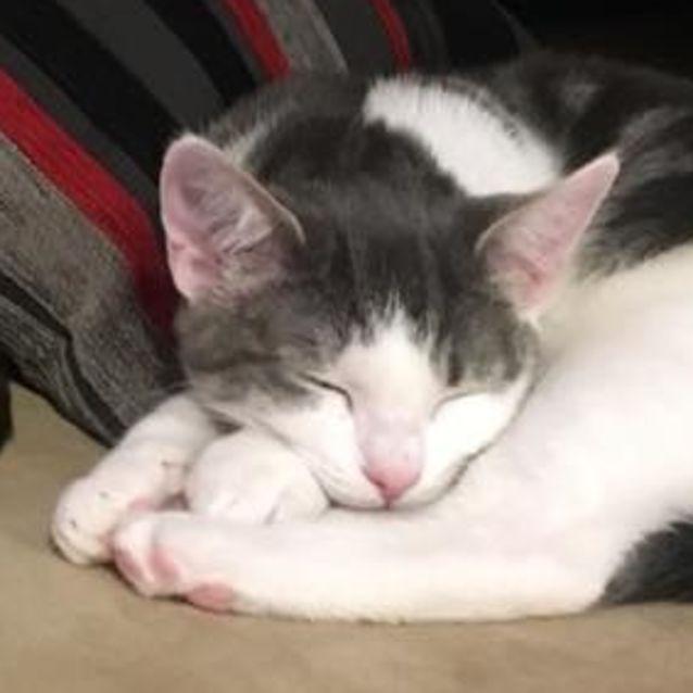 Photo of Charming Ash