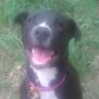 Photo of Penny (On Trial Adoption)