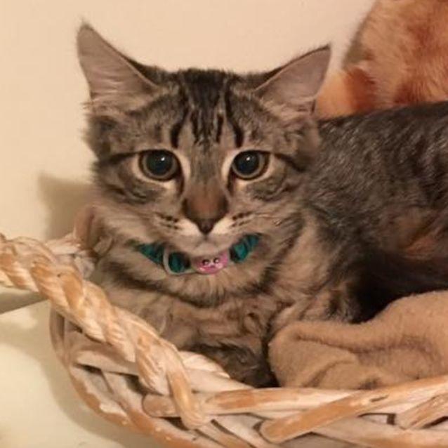 Photo of Chilla