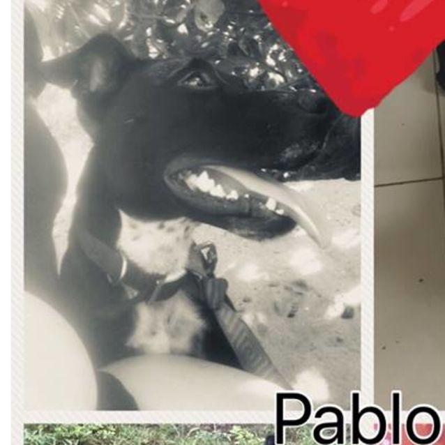 Photo of Pablo (On Adoption Trial)