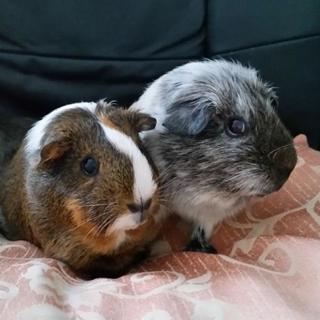 Photo of Olive And Oreo