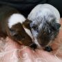 Photo of Olive And Oreo