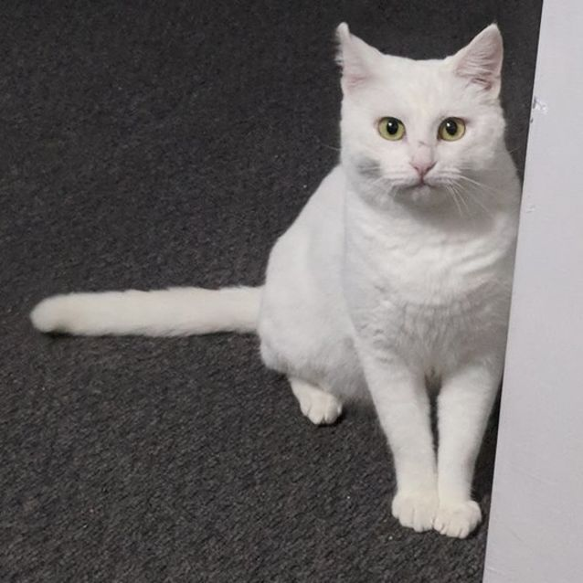 Photo of Penelope If022 18