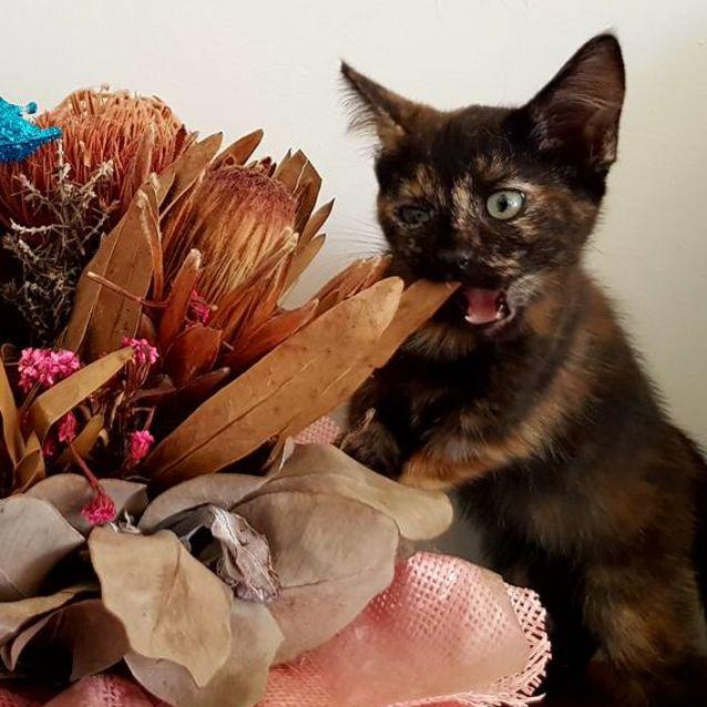 Photo of Meli