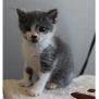 Photo of Willie G **2nd Chance Cat Rescue**