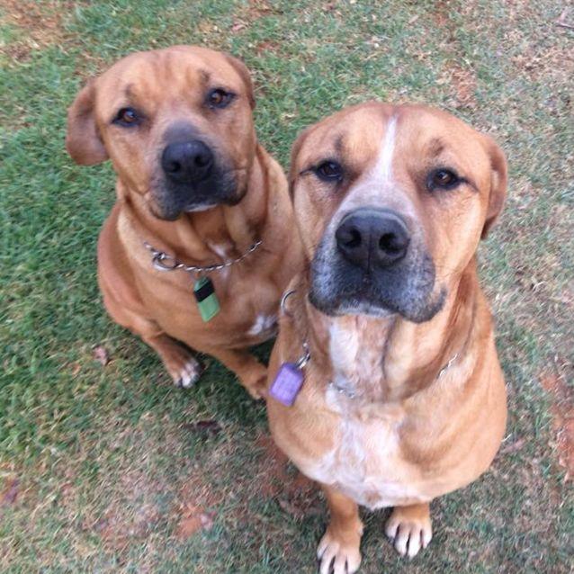 Photo of Buddy & Duke Db372 & Db373