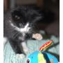 Photo of Meowee **2nd Chance Cat Rescue**