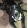 Photo of Sassy (On Adoption Trial)