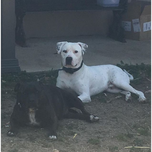Photo of Frosty (On Trial Adoption)