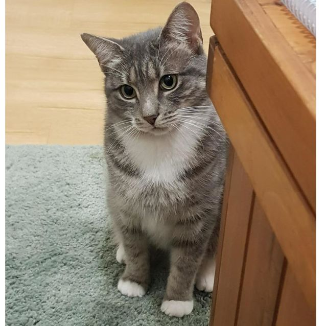 Photo of Lady (Located In Fairfield)