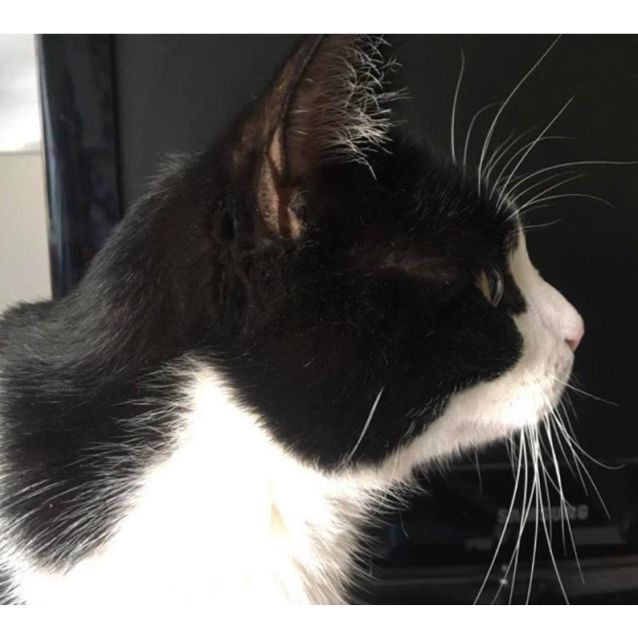 Photo of Jinx   Cat Of The Month For November