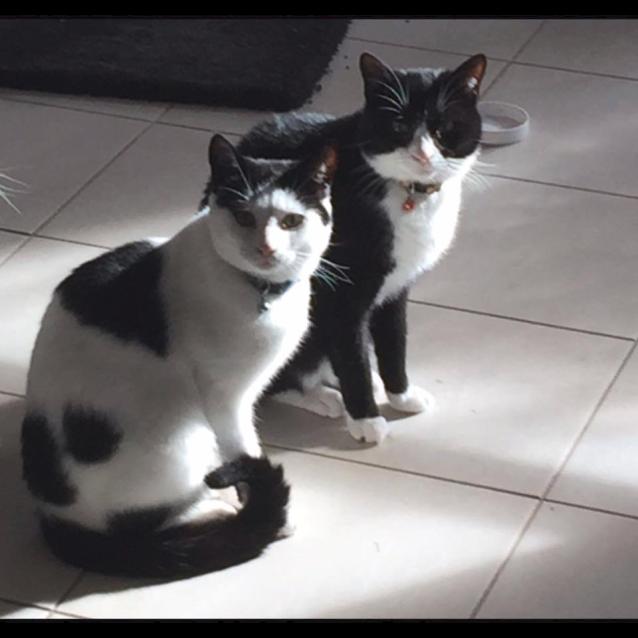 Photo of Ak0899 & Ak0900 – Felix And Thomas
