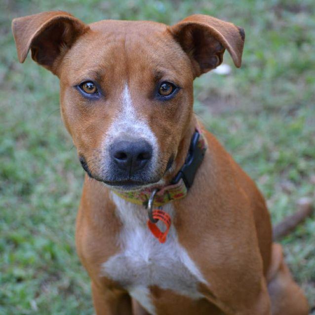 Photo of Sawyer