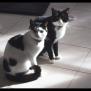 Photo of Ak0899/Ak0900 – Felix And Thomas