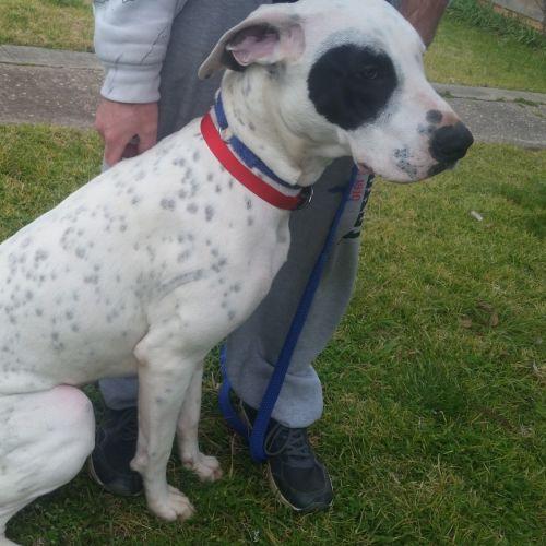 Daisy  - Mixed Breed Dog