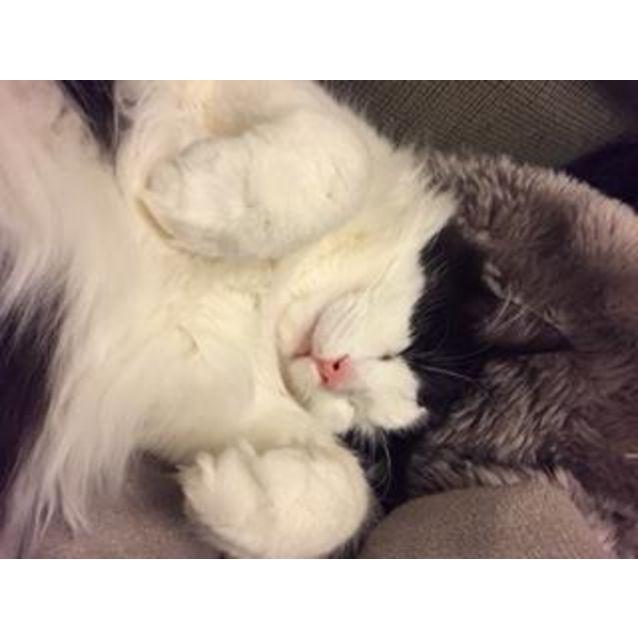 Photo of Genevive ^^Dandy Cat Rescue^^