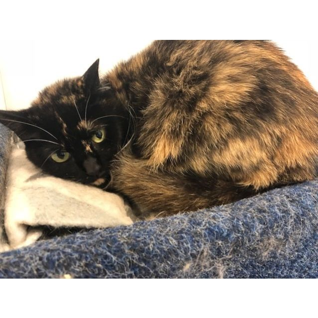 Photo of Smudge   K121221