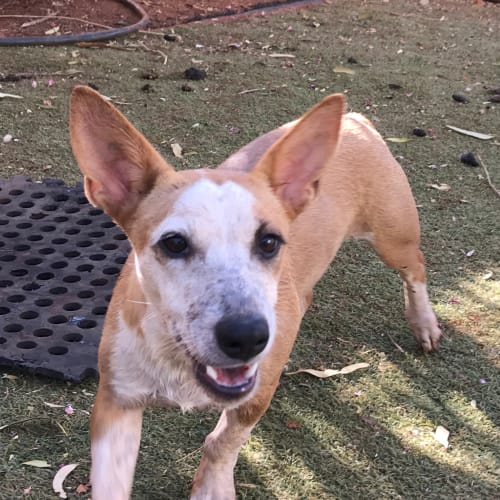 Jessie - Mixed Breed Dog