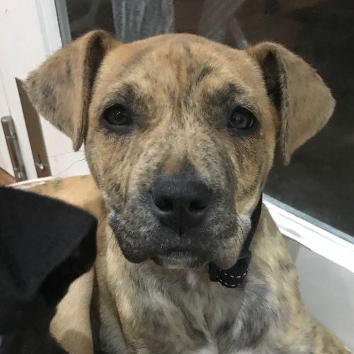 Liz - Mixed Breed Dog