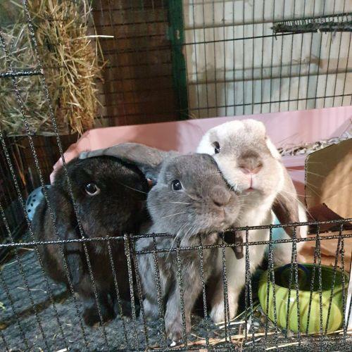 Ralph, Waka & Nulu
