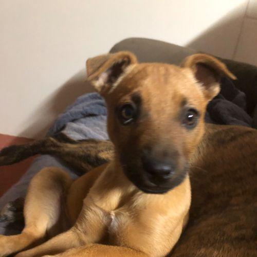 Millie - Mixed Dog