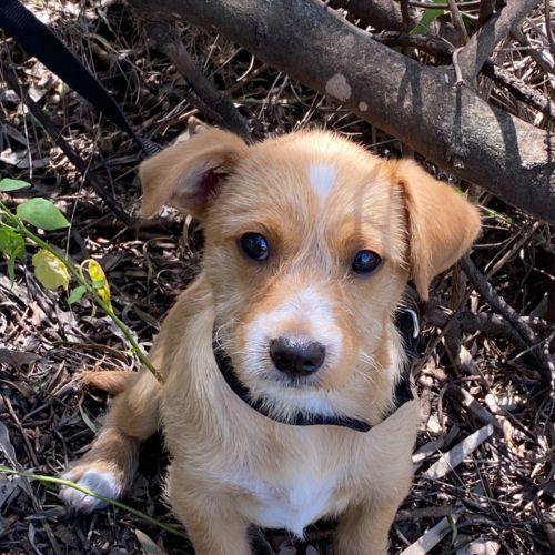 Leo - Terrier Dog