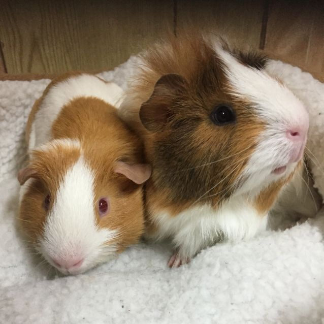 Photo of Piggy Smalls And Missy Piggins